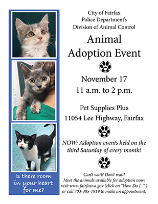 adoption flyer dated 11-2018.2