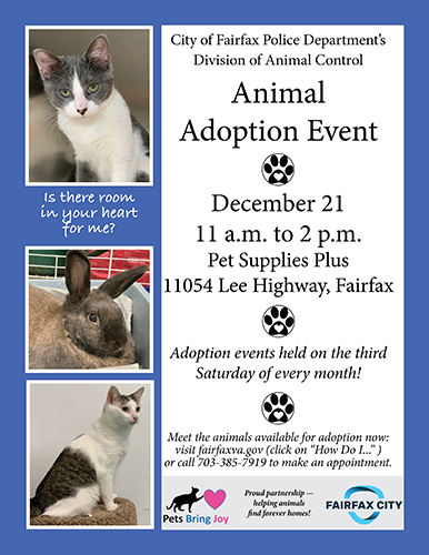 Animal Adoption Flyer December 2018