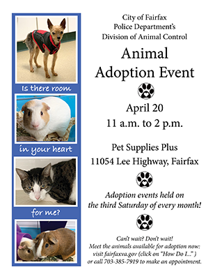 adoption flyer dated April 2019 for website