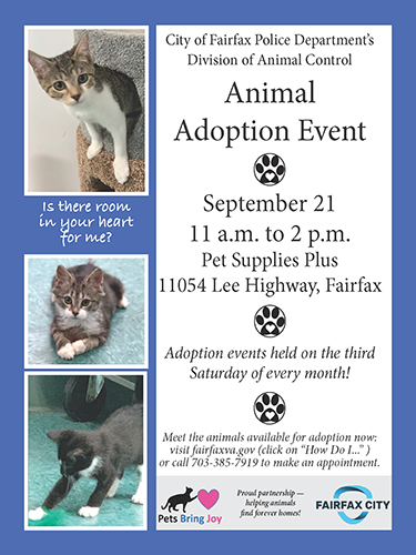 adoption flyer web-news 09-19