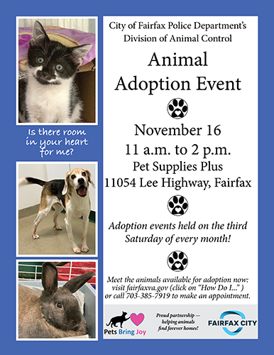 adoption flyer blue web 11-19